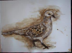 5) Turtle Dove copy