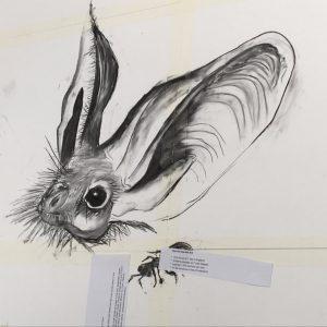 Long Ears and Narrow Heads