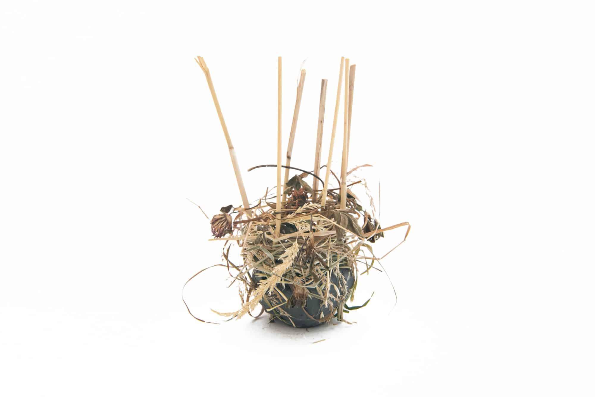 Shrill Carder Bee Nest